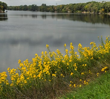 River & Yellow Flowers